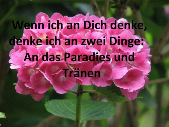 hortensien_düngen-1024x768