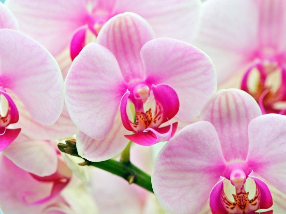 orchid-flowers-22283856-1600-1200