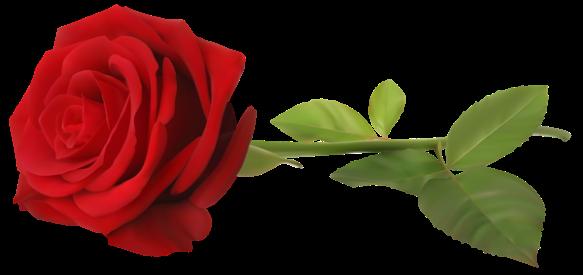 Red_Rose_with_Stem_Transparent_PNG_Clip_Art_Image
